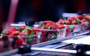Переработка фруктов и овощей
