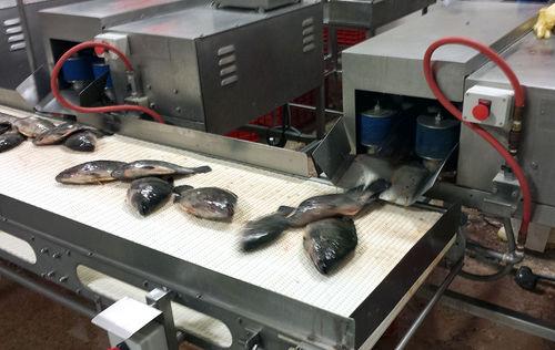 потрошитель для рыбы